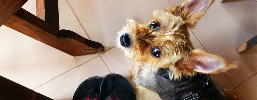 A Small Dog's Guide to Playa del Carmen