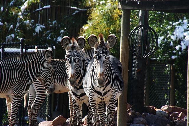 Photo Essay: The Denver Zoo