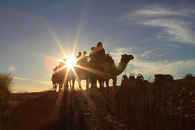 Camels_Aus_Outback