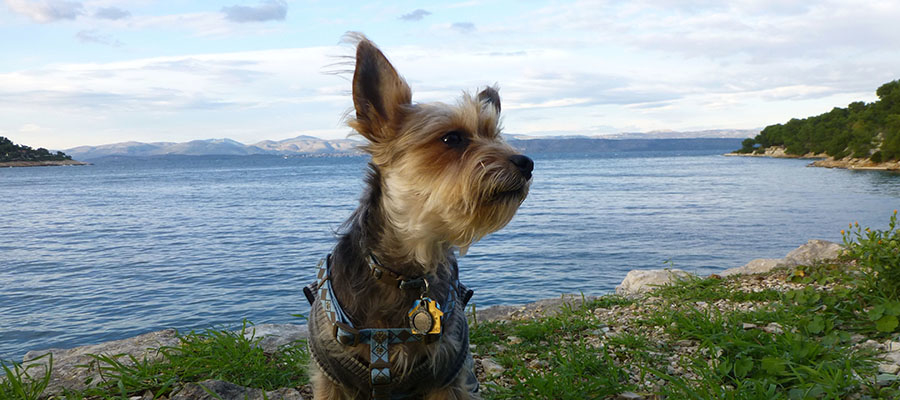 A Small Dog's Guide to Croatia (Split & Rovinj)