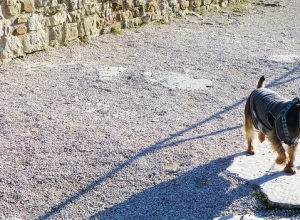 Everything You Ever Wanted to Know About Traveling With a Dog