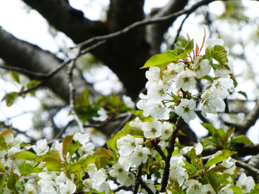 Photo Essay: Spring in the Lauterbrunnen Valley