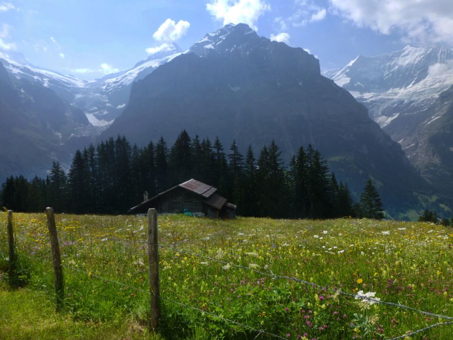 Hiking the Alps: Grindelwald to First
