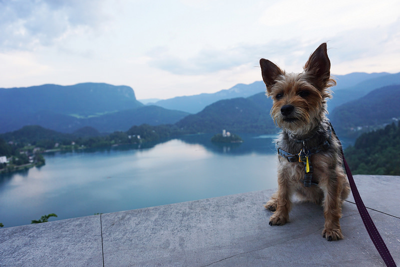 The Small Dog's Guide to Slovenia