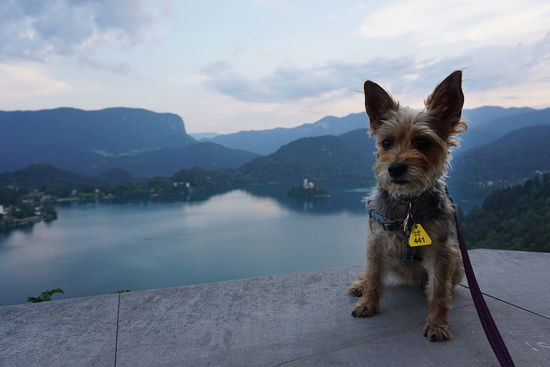 Have Dog, Will Travel: A Look at 2015 on the Road