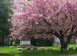 Woodlawn Cemetery: A Photo Essay