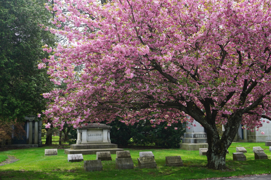 Woodlawn Cemetery: A Photo Essay