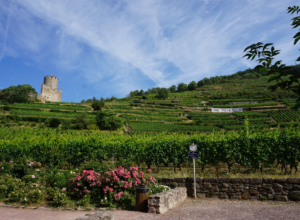 Adorable town alert: Kaysersberg, France
