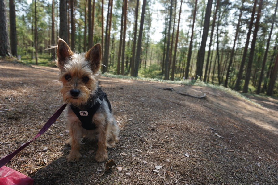 Is Estonia dog-friendly?