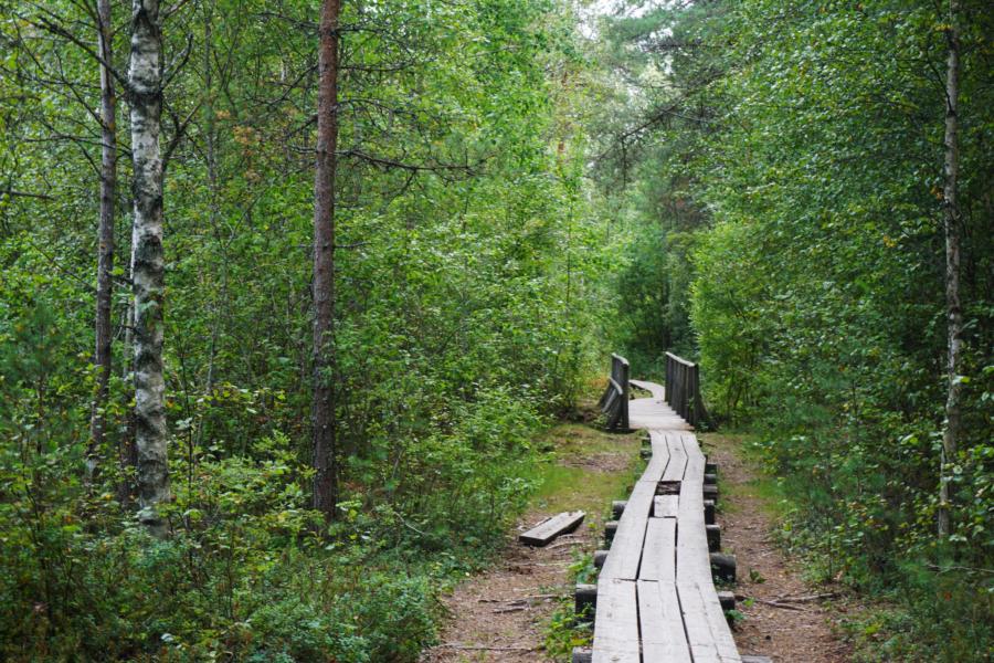 Hiking Estonia: Pääsküla Bog Study Trail